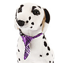 Cães Gravata Púrpura Primavera/Outono Casamento
