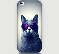 Fashion Cat Pattern Phone Back Case Cover for iPhone5C