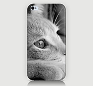 White Cat Pattern Case Back Cover for Phone4/4S Case