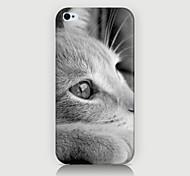 blanc motif de chat Retour Housse pour phone4 / 4s