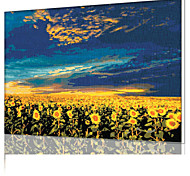 DIY Digital Oil Painting  Frame Family Fun Painting All By Myself    Sunflower - The Vast  X5003