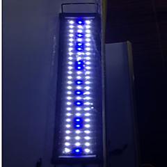 Akvaariot LED-valaistus Sininen Energiansäästö LED-lamppu 220V