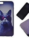 For iPhone 6 Case / iPhone 6 Plus Case Pattern Case Back Cover Case Cat Hard PC iPhone 6s Plus/6 Plus / iPhone 6s/6