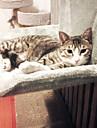 Chat Couchages Animaux de Compagnie Tapis & Planches Couleur Pleine Garder au chaud Lavable Decontracte / Quotidien Gris Jaune
